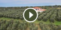 Watch the new video of Il Cavallino Agricultural Company